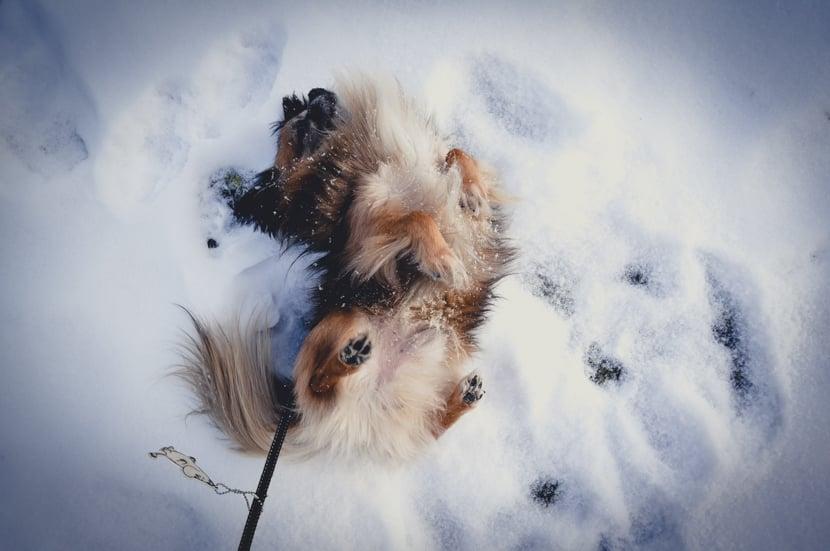 mani snö-1