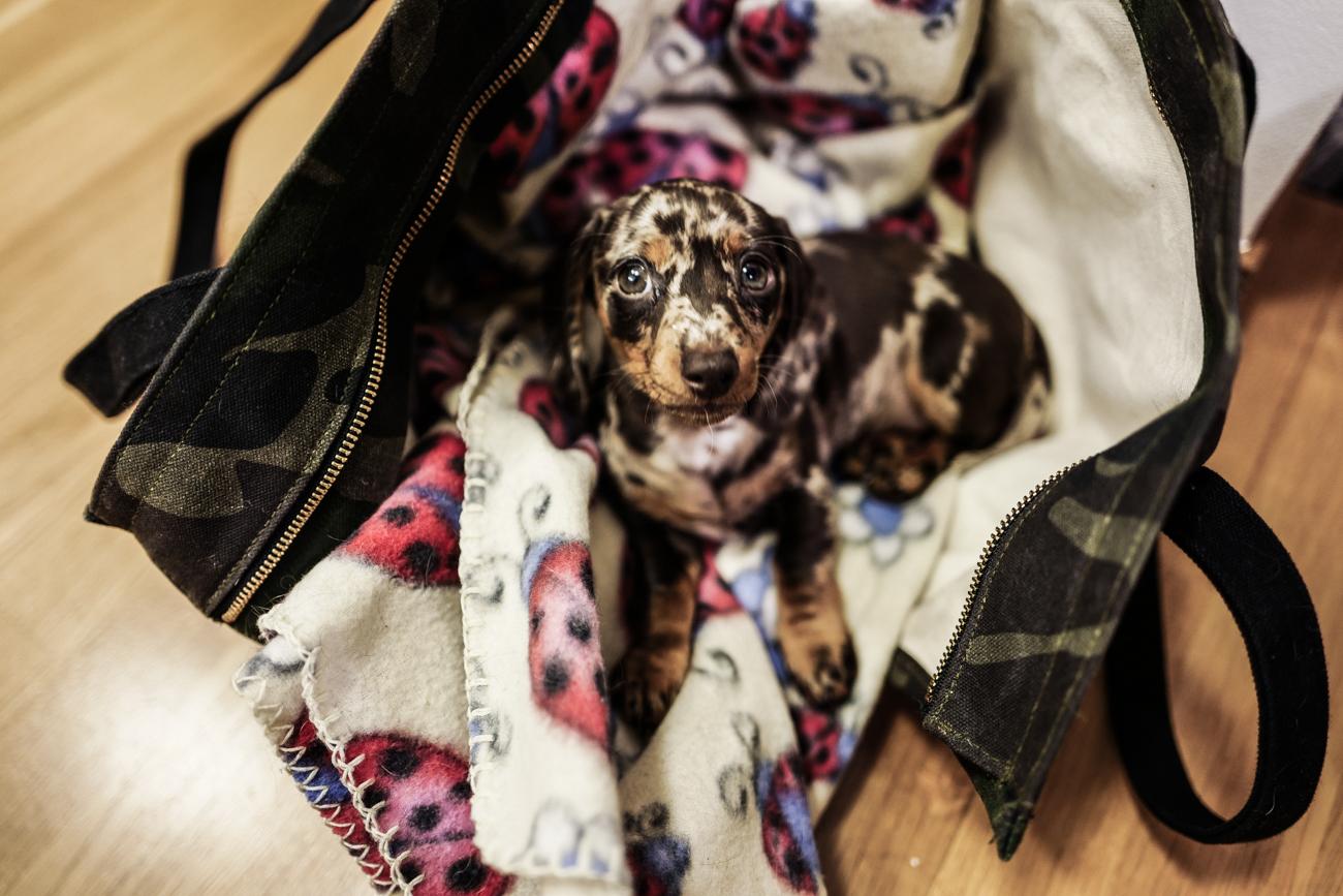 KenzaZouiten_puppy-1