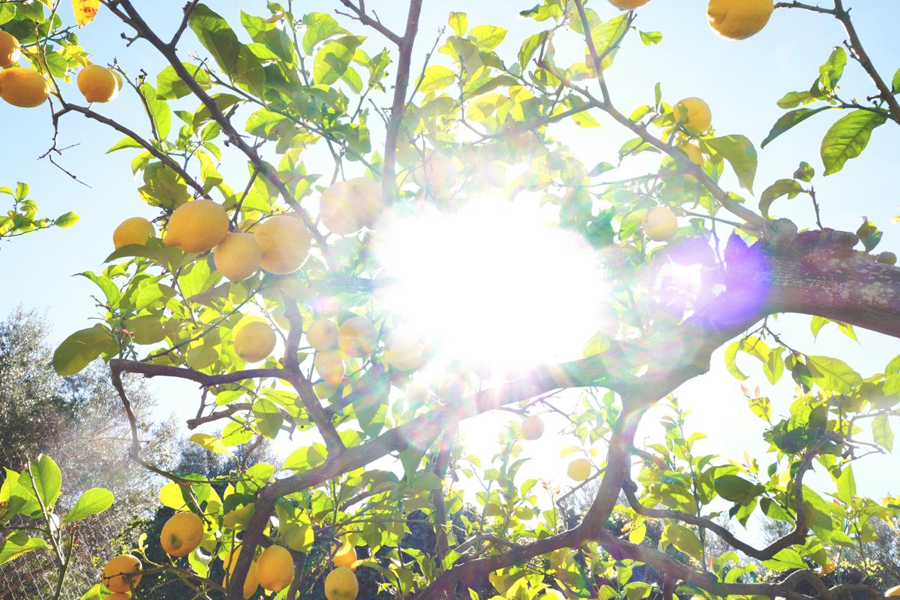 KenzaZouiten_lemons7